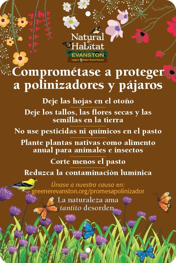 Pledge in Spanish