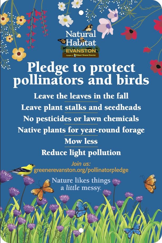 Pledge: Blue background wildflowers